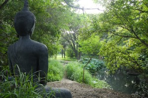 forestbuddha